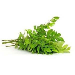 Picture of Curry leaves 1 nos